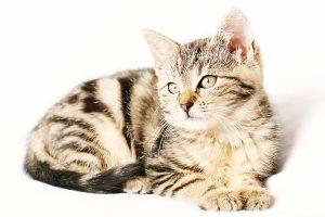 Nombres que provienen de la naturaleza para las mascotas